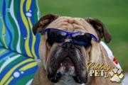 Celebrity Petz